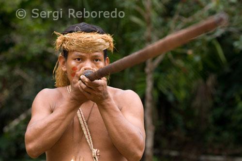 Llegamos a puerto principal de Iquitos para abordar el Amazon Queen, el barco insignia de la empresa Explorama, con que surcaremos las aguas del río más largo del mundo con sus 6800 kilómetros. Nuestra meta es llegar río abajo hasta el Ceiba Tops ubicado a unos cuarenta kilómetros.