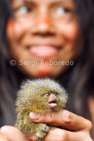 Yagua town. Pet a yaguas adolescent girls, a little pygmy marmoset (the smallest monkey in the world).