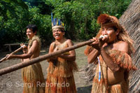 Yagua town. Blowguns, blowgun calls are greatly elongated, hand-crafted and used for hunting.
