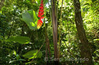 General map of the Amazon jungle and forest with a closeup of a heliconia.