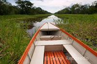 Navigating one of the tributaries of the Amazon to Iquitos about 40 miles near the town of Indiana.