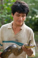 A native holds a snake in one of the primary forests of the Amazon rainforest.
