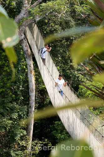 Amazon Canopy Walkway one of the longest suspension bridges in the world which will. & PERUVIAN AMAZON Yagua The Amazon Canopy Walkway one of the ...