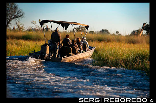 A speedboat sails the Okavango Delta on a water safari camp organized from Eagle Island Camp by Orient Express, outside the Moremi Game Reserve in Botswana. There are rivers that die at sea, waterways that run for miles over land, fatter, increasing its flow, to release into the ocean. There are others that flow in lakes, in other rivers ... But there are other, very few, who defied the established just pouring water into the desert sands inland, disappearing, vanishing as if by magic. This is what happens to the Okavango River, 1,600 miles after birth. After sprouting in southwestern Angola (which has the name of Cubango), turns east, away from the sea, starting its journey along the border between South Africa and Namibia (then being known as and Okavango) to go to die to Botswana. Well away from the Atlantic and Indian Oceans, in the middle of the southern cone of the continent, creating the largest inland delta in the world. Is the Kalahari which hosts the river, especially in the months of July and August, shortly after entering Botswana to the north. The aerial image is sensational phenomenon: in half the prevailing aridity, pale and bright land, languages ??stained green water their journey south. It looks like a tree without branches whose roots move unsuccessfully to nowhere. Such is the size of the delta (16,000 square miles, slightly larger than the area of ??the province of Huesca) that would have to climb on a satellite to see this accurately, but the flight can be done in light aircraft from Maun helps to gain an great idea of ??what is happening there. The river moves perfectly ordered, channeled, forming a broad riverside to reach the height of Sepupa, where everything is messed up, it overflows. This is where begins the inner delta, where the river splits into a thousand and one different routes (more the higher the water level that year) creating a maze of islands, rivers, streams, rivulets, brooks ... tens of kilometers later vanish, disappear.