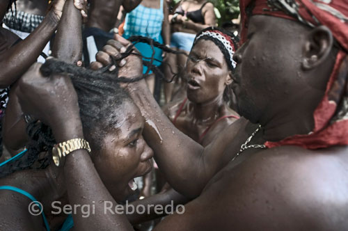 A woman in a trance is aided by the rest of voodoo devotees. Most of Voodoo rituals begin with Christian prayers recited in French, then switches to the Creole language, a combination mainly of French, Spanish, African and 'patois' - the latter word that the French applied with contempt to what they do not understand. Begin the ecstatic dances and drums to increasingly frantic pace. The activities of sorcery and spells, contain fetishism (word derived from the Portuguese feitiço 'dating from 1760) then follow pagan cults of sacrifice, trance handling and communication with their gods, whose names indicate their origin in Dahomey. Voodoo was persecuted in Haiti since 1685, when Catholic priests, managers of plantations and slaves, banned 'songs and the assemblies of blacks with or without drums. That contributed to its spread as these were clearly anti-slavery meetings.