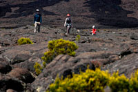One family making a trek over the lava of volcano Piton de la Fournaise. It is the only active volcano on the island. Its eruptions attract thousands of visitors. The lava flows extend up the east coast causing a unique landscape. In the volcano, when not active, you can also hike. There are several marked routes. The access road to the volcano worth it. We cross landscapes full of vegetation adapted to the altitude and humidity conditions (constant mist) that is in this area. You can see several craters and a completely desert called Plaine des Sables at which you reach after crossing the Pas des Sables where it is worth stopping to admire the scenery. Before visiting the volcano I recommend you do a stop in the village of Bourg-Murat where lies the Maison du Volcan, a museum which explains the formation of the island, volcanic activity and major eruptions throughout history Reunion. Project a very interesting visual.