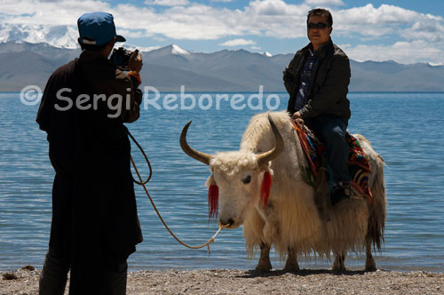 A Chinese tourist is photographed standing on a yak in the lake Nam Tso. Namtso is renowned as one of the most beautiful in the mountains Nyainqentanglha. Often incorrectly said to Namtso is the highest lake in Tibet (or even the world), or saline lake is the highest in the world, but there are many small lakes at altitudes over 5,500 m in the Himalayas and the Andes. Among the lakes with an area of over 50 km ², the highest lake of fresh water is Lake Sengli, at an altitude of 5386 m and an area of 78 km ², while the salt lake higher the lake Meiriqie, at an altitude of 5354 m and an area of 64 km ² (both found in Tibet). However, if that is the Namtso highest lake in the world with an area of over 500 km ².