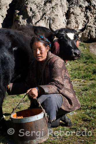 A woman milking a cow in a small settlement of Dopkas (pastoralists). Gyantse. These nomads traveling in these parts like ghosts of a past that mountain ranges surrounding us seem reluctant to let go. The hospitality and joy with which we receive is amazing and as we saw later completely devoid of commercialism that might involve comprehensive food and sharing experiences about Western tourists in exchange for a few yuan (one yuan equals about 0.10 euros ). Not even to say goodbye and despite our insistence, our friendly hosts agreed to receive any money in return for their time, and especially food. Outside the store entertain us first, and as is required with a tea made with yak fat somewhat bitter taste and characteristic odor (even today when I recall the smell of these places you think invading Tibetan environment). The burned skin of our hosts is mute witness to the harsh weather conditions in the herdsmen living in these harsh, nevertheless, cheeks flushed, the colorful headdresses adorning the hair and clothing, the slender but small figure showing the most of them and the serenity with which seem to face his destiny makes them appear very attractive to our eyes.