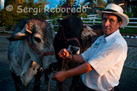 "A farmer keeps cattle under cover at sunset near Manizales. Manizales is the capital of Caldas. It is a city in central western Colombia, located in the Central Cordillera of the Andes, near the Nevado del Ruiz. It is part of the call and the call paisa region Golden Triangle, has a population of 430,389 inhabitants according to official population projections for 2011, its metropolitan area encompassing the municipalities of Manizales, Neira, Villamaria, Palestine and Chinchiná comes to a population of 768,200 inhabitants. It belongs, along with Risaralda, Quindio, the North Valley and southwestern Antioquia of Colombian coffee. Founded in 1849 by settlers from Antioquia, today is a city with economic, industrial, cultural and turísticas.4 of cultural activity is to highlight the Manizales Fair and the International Theatre Festival of Manizales. Manizales is called the ""City of Doors Open"" thanks to the friendly people. Also known as ""Manizales of the Soul"" because of a pasodoble bull that bears his name and as ""The World Capital of Water"" by its large water resources."