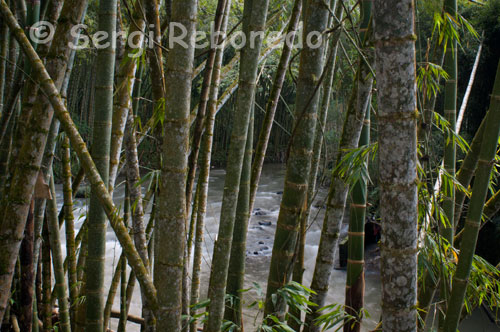 Trees by the River Otún as it passes through the outskirts of the city of Pereira. The river is a short river Otún Colombia, located in the department of Risaralda, born in Lake Otún, and empties into the Cauca River. Go through the city of Pereira. Takes in different protected areas like Los Nevados National Park, the Sanctuary of Fauna and Flora and Ucumarí Park. It is the only source of drinking water for the city of Pereira. Unfortunately this river has a high pollution in the section that is located in the city of Pereira because of the dumping of sewage and industrial.