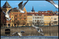 Czech Republic. Prague. Several seagulls fly around the Charles Bridge. The Charles Bridge (Czech Karl? V most) is the oldest bridge in Prague, Vltava river and through the Old Town to the Lesser Town. It is the second oldest existing bridge in the Czech Republic. Its construction started in 1357 with the approval of King Charles IV, and finished in the early fifteenth century. Since at the time was the only way to cross the river, the Charles Bridge became the most important communication channel between Old Town, Prague Castle and adjacent areas until 1841. The bridge was also an important link for trade between Eastern and Western Europe. Originally this communication channel was called Stone Bridge (Kamenný most) or the Prague Bridge (Pražský most), but it takes its current name since 1870. The bridge has a length of 516 meters and its width is about 10 meters, while resting on 16 arches. It is protected by three bridge towers between its two heads, two in Malá Strana and the remaining at the end located in the Old City. The tower located at the head of the Old Town is considered by many as one of the most impressive constructions of Gothic architecture in the world. The bridge is decorated by 30 statues on both sides of it, most of which are in Baroque style and were built around 1700. At night the Charles Bridge is a silent witness to the medieval times. But during the day, his face changes completely and becomes a very busy place. Artists and traders try to make money at the expense of the large flow of tourists daily visit the place.